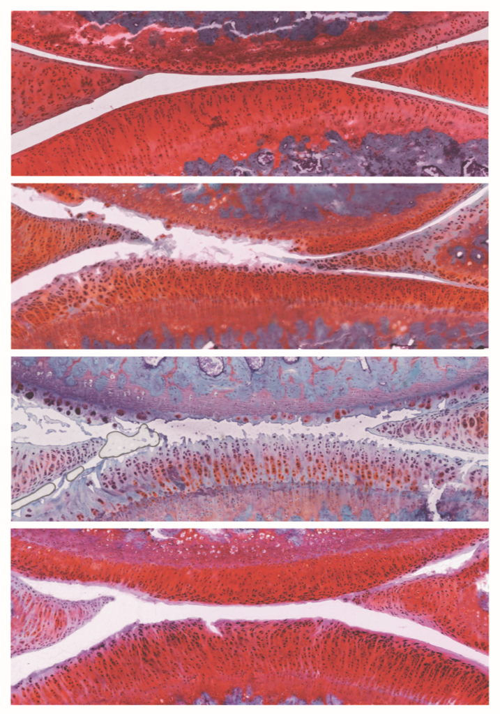 Imagen publicacion Protein&Cell